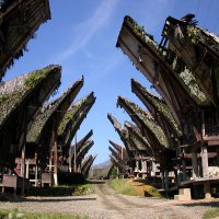 MAKASSAR TORAJA TOUR 4 DAYS / 3 NIGHT